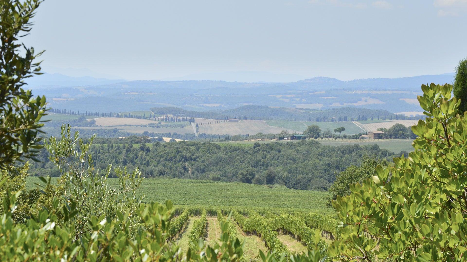 Wine Tours in Podere Brizio